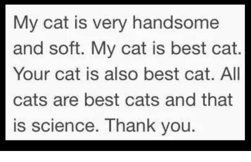 Cats, Thank You, and Best: My cat is very handsome  and soft. My cat is best cat.  Your cat is also best cat. All  cats are best cats and that  is science. Thank you.