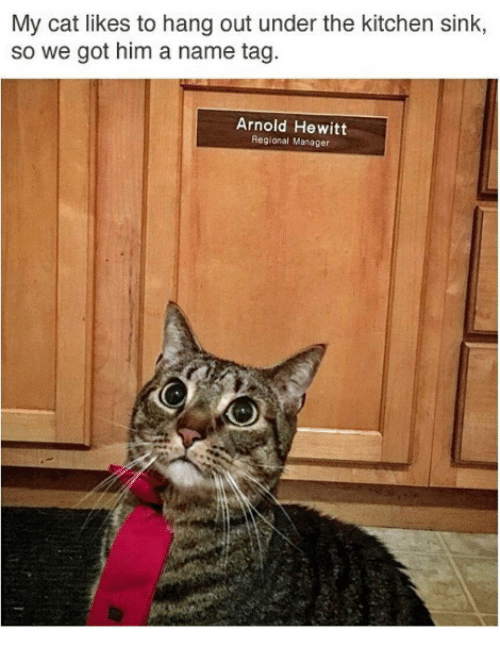 Grumpy Cat, Arnold, and Kitchen: My cat likes to hang out under the kitchen sink,  so we got him a name tag.  Arnold Hewitt  Regional Manager