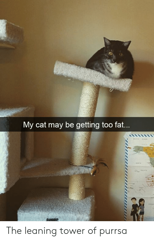 Dank, Fat, and 🤖: My cat may be getting too fat...  MIno The leaning tower of purrsa