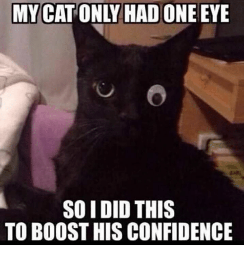 Confidence, Memes, and Boost: MY CAT ONLY HAD ONE EYE  SO IDID THIS  TO BOOST HIS CONFIDENCE