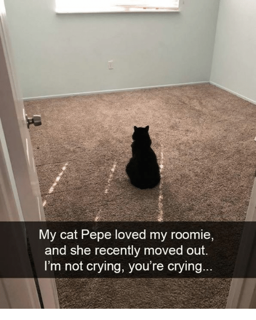 Crying, Memes, and Not Crying: My cat Pepe loved my roomie  and she recently moved out.  I'm not crying, you're crying