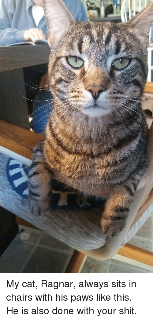 Shit, Cat, and This: My cat, Ragnar, always sits in chairs with his paws like this. He is also done with your shit.