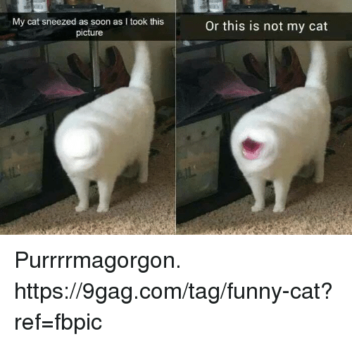 9gag, Dank, and Funny: My cat sneezed as soon as I took this  picture  Or this is not my cat Purrrrmagorgon. https://9gag.com/tag/funny-cat?ref=fbpic