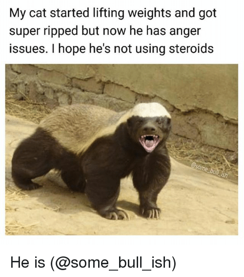 Funny, Hope, and Got: My cat started lifting weights and got  super ripped but now he has anger  issues. I hope he's not using steroids He is (@some_bull_ish)