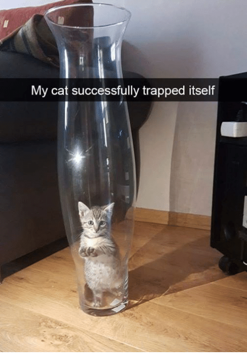 Memes, 🤖, and Cat: My cat successfully trapped itself