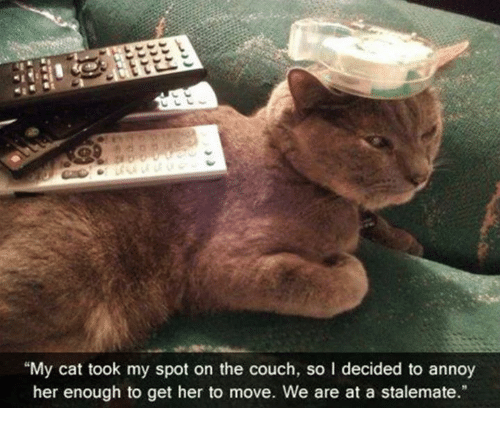 Dank, Couch, and 🤖: My cat took my spot on the couch, so I decided to annoy  her enough to get her to move. We are at a stalemate.""