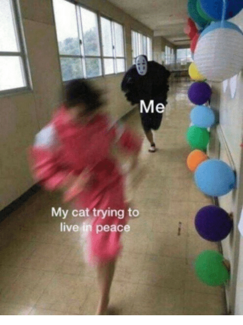 Live, Peace, and Cat: My cat trying to  live in peace
