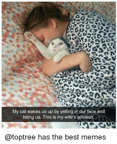 Funny, Memes, and Best: My cat wakes us up by yelling in our face and  biting us. This is my wife's solution. @toptree has the best memes