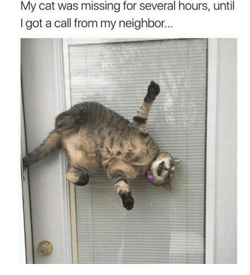 Got, Cat, and Call: My cat was missing for several hours, until  I got a call from my neighbor