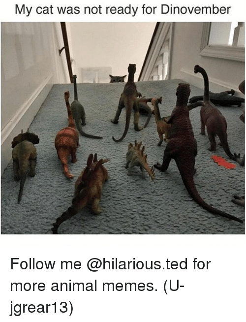 Funny, Memes, and Ted: My cat was not ready for Dinovember Follow me @hilarious.ted for more animal memes. (U-jgrear13)