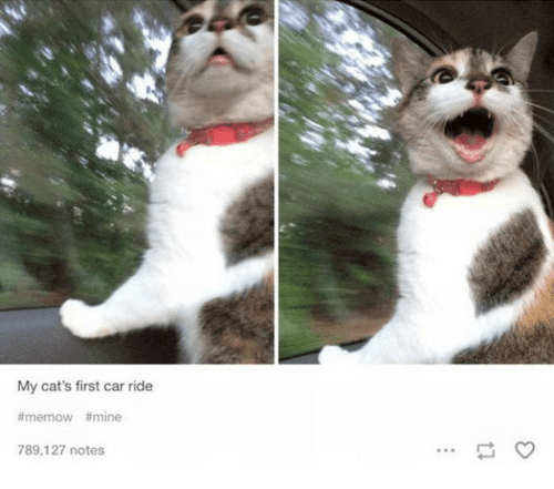 My Cats First Car Ride Memow Mine 789127 Notes Dank Meme On Meme