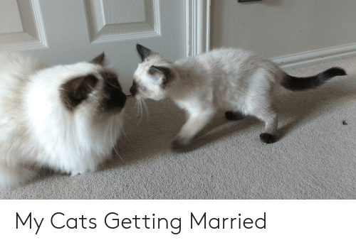 My Cats Getting Married