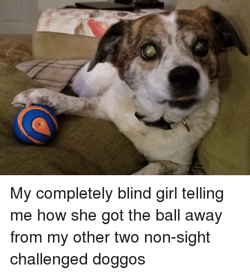 Girl, How, and Got: My completely blind girl telling me how she got the ball away from my other two non-sight challenged doggos