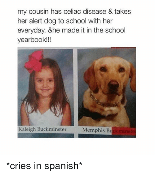 Crying, Dogs, and School: my cousin has celiac disease & takes  her alert dog to school with her  everyday. &he made it in the school  yearbook!!!  Kaleigh Buckminster  Memphis Bu *cries in spanish*