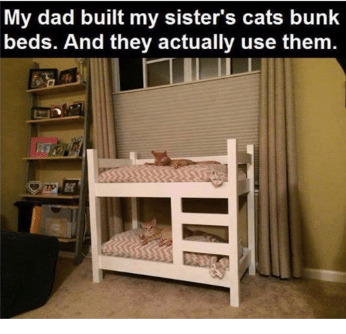 Cats, Dad, and Memes: My dad built my sister's cats bunk  beds. And they actually use them