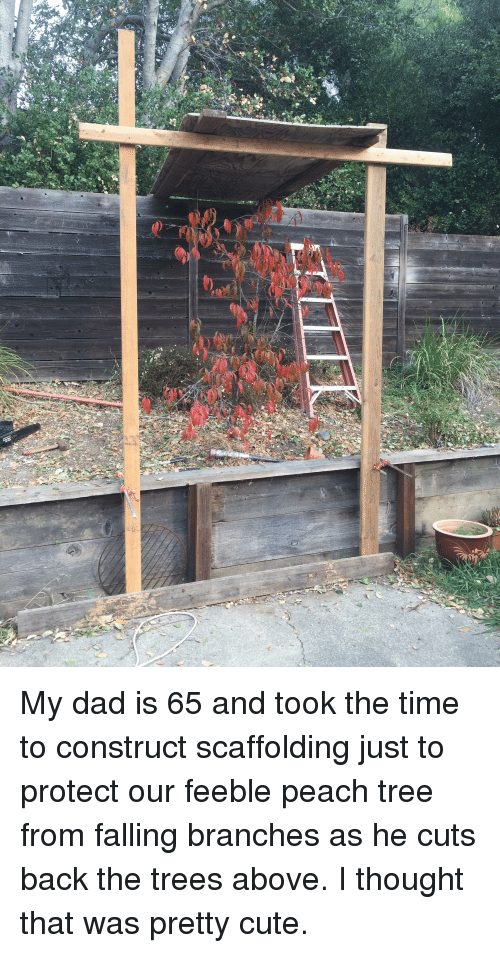 Cute, Dad, and Time