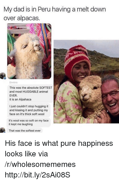 Dad, Animal, and Http: My dad is in Peru having a melt down  over alpacas  Dimitris  This was the absolute SOFTEST  and most HUGGABLE animal  EVER  it is an Alpahaca  l just couldn't stop hugging it  and kissing it and putting my  face on it's thick soft wool  It's wool was so soft on my face  it kept me laughing  That was the softest ever His face is what pure happiness looks like via /r/wholesomememes http://bit.ly/2sAi08S