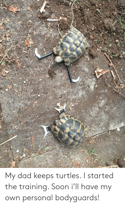 Dad, Soon..., and Personal: My dad keeps turtles. I started the training. Soon i'll have my own personal bodyguards!