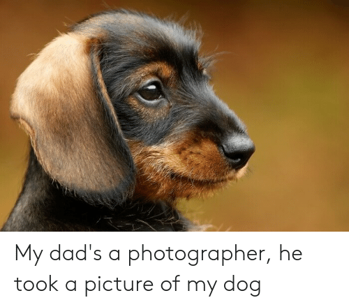 A Picture, Dog, and Picture: My dad's a photographer, he took a picture of my dog