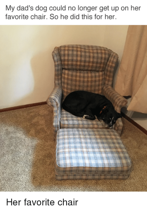 Chair, Her, And Dog: My Dadu0027s Dog Could No Longer Get Up On