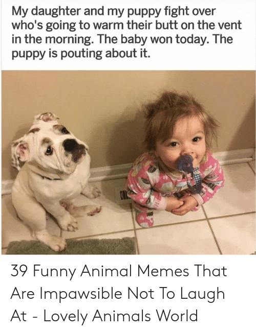 Animals, Butt, and Funny: My daughter and my puppy fight over  who's going to warm their butt on the vent  in the morning. The baby won today. The  puppy is pouting about it. 39 Funny Animal Memes That Are Impawsible Not To Laugh At - Lovely Animals World