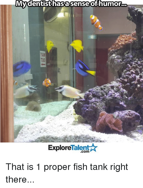 Memes, 🤖, and Tank: My dentist hasasense of humor.  Talent  Explore That is 1 proper fish tank right there...
