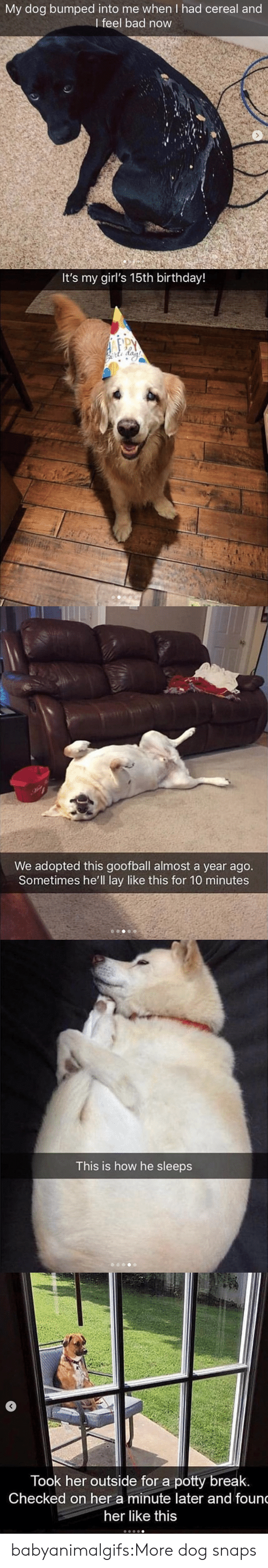 Bad, Birthday, and Girls: My dog bumped into me when I had cereal and  I feel bad now   It's my girl's 15th birthday!   We adopted this goofball almost a year ago.  Sometimes he'll lay like this for 10 minutes   This is how he sleeps   Took her outside for a potty break  Checked on her a minute later and foun  her like this babyanimalgifs:More dog snaps