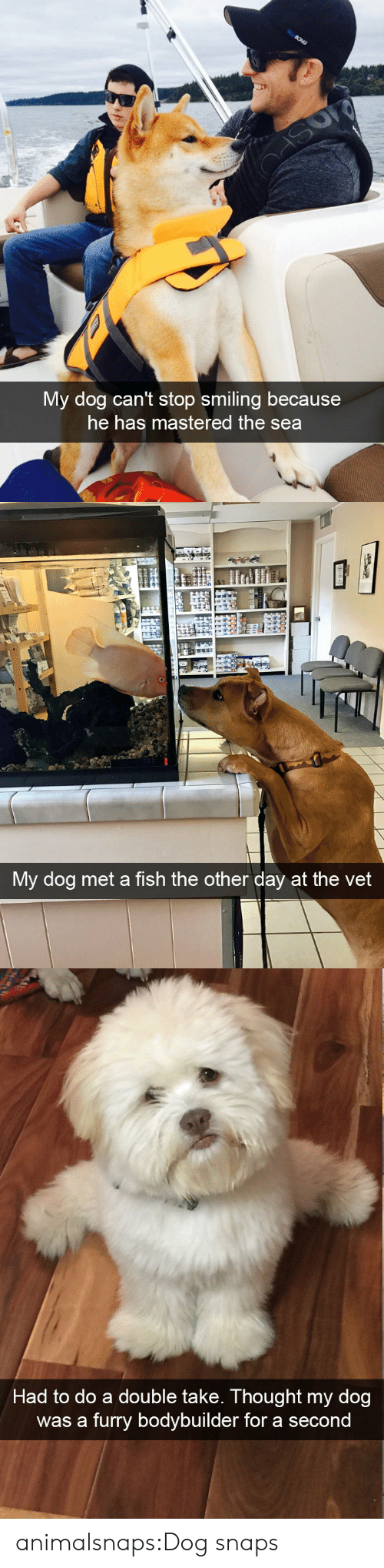 Target, Tumblr, and Blog: My dog can't stop smiling because  he has mastered the sea   My dog met a fish the other day at the vet   Had to do a double take. Thought my dog  was a furry bodybuilder for a secon animalsnaps:Dog snaps