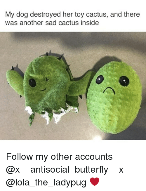 my dog destroyed her toy cactus and there was another 23277644 ✅ 25 best memes about cactus cactus memes