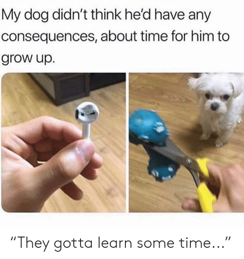 """Memes, Time, and 🤖: My dog didn't think he'd have any  consequences, about time for him to  grow up. """"They gotta learn some time..."""""""