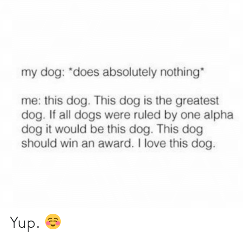 """Dogs, Love, and Memes: my dog: """"does absolutely nothing  me: this dog. This dog is the greatest  dog. If all dogs were ruled by one alpha  dog it would be this dog. This dog  should win an award. I love this dog. Yup. ☺️"""