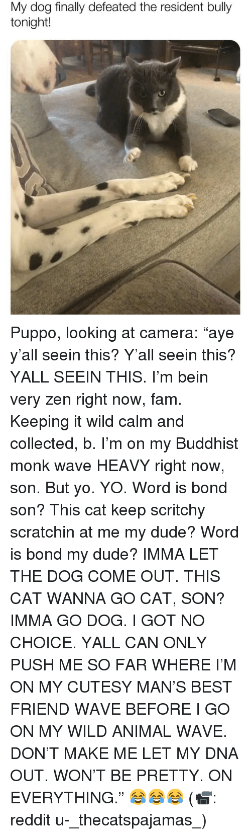 """Best Friend, Dude, and Fam: My dog finally defeated the resident bully  tonight! Puppo, looking at camera: """"aye y'all seein this? Y'all seein this? YALL SEEIN THIS. I'm bein very zen right now, fam. Keeping it wild calm and collected, b. I'm on my Buddhist monk wave HEAVY right now, son. But yo. YO. Word is bond son? This cat keep scritchy scratchin at me my dude? Word is bond my dude? IMMA LET THE DOG COME OUT. THIS CAT WANNA GO CAT, SON? IMMA GO DOG. I GOT NO CHOICE. YALL CAN ONLY PUSH ME SO FAR WHERE I'M ON MY CUTESY MAN'S BEST FRIEND WAVE BEFORE I GO ON MY WILD ANIMAL WAVE. DON'T MAKE ME LET MY DNA OUT. WON'T BE PRETTY. ON EVERYTHING."""" 😂😂😂 (📹: reddit u-_thecatspajamas_)"""