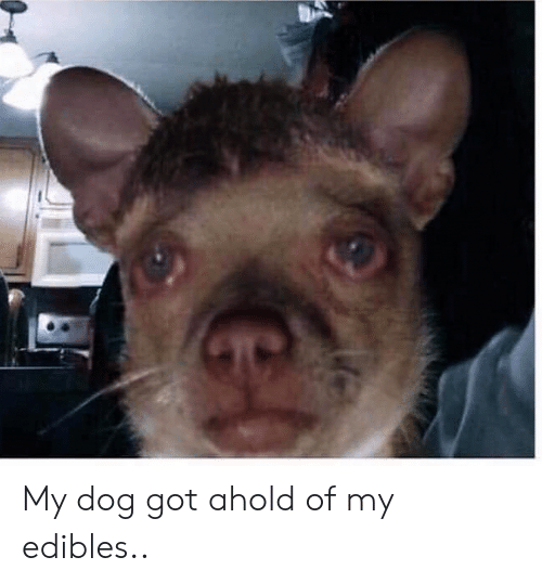 My Dog Got Ahold of My Edibles | Reddit Meme on ME ME