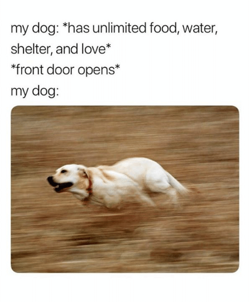 """Food, Love, and Water: my dog: """"has unlimited food, water,  shelter, and love*  """"front door opens*  my dog:"""