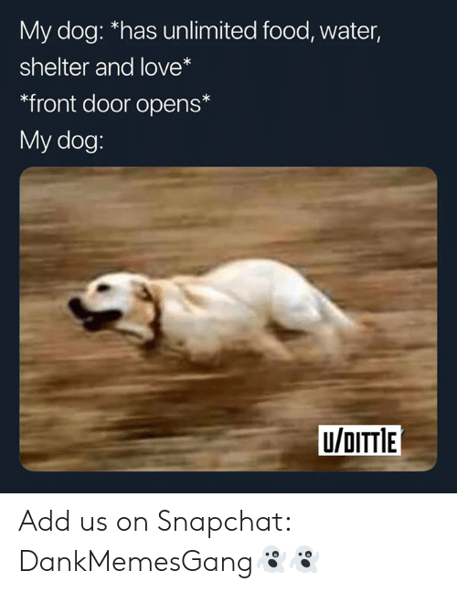 Food, Love, and Snapchat: My dog: *has unlimited food, water  shelter and love*  *front door opens*  My dog:  U/OITTIE Add us on Snapchat: DankMemesGang👻👻