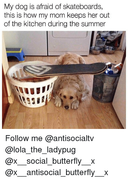Memes, Summer, and Butterfly: My dog is afraid of skateboards,  this is how my mom keeps her out  of the kitchen during the summer Follow me @antisocialtv @lola_the_ladypug @x__social_butterfly__x @x__antisocial_butterfly__x