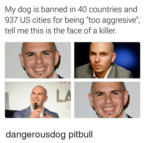 My Dog Is Banned in 40 Countries and 937 US Cities for Being Too