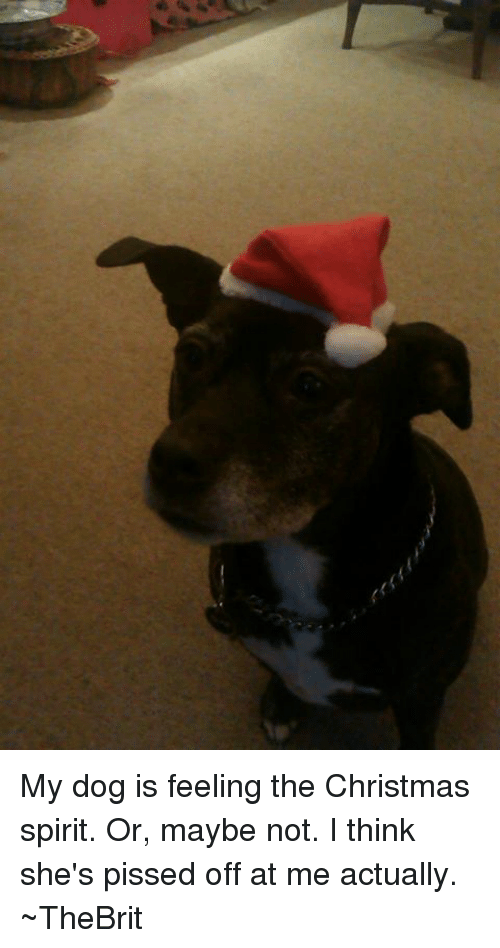 My Dog Is Feeling the Christmas Spirit or Maybe Not I Think She's