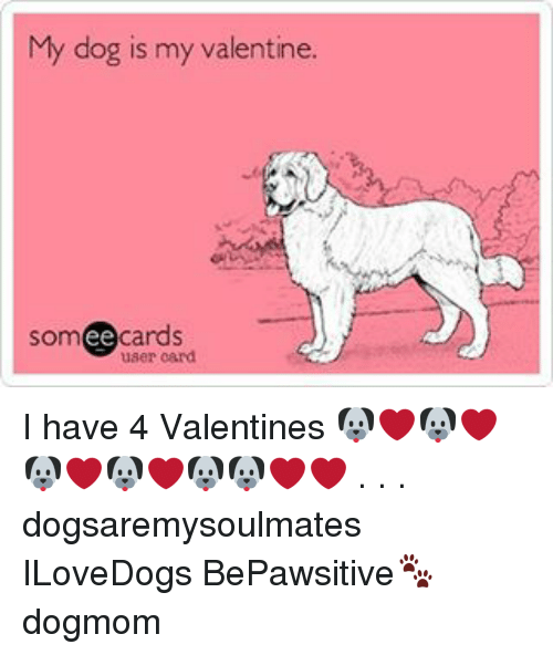 Memes, 🤖, and Valentines Cards: My dog is my valentine.  cards  ee  user card I have 4 Valentines 🐶❤🐶❤🐶❤🐶❤🐶🐶❤❤ . . . dogsaremysoulmates ILoveDogs BePawsitive🐾 dogmom