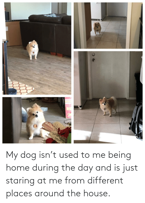 Home, House, and Dog: My dog isn't used to me being home during the day and is just staring at me from different places around the house.