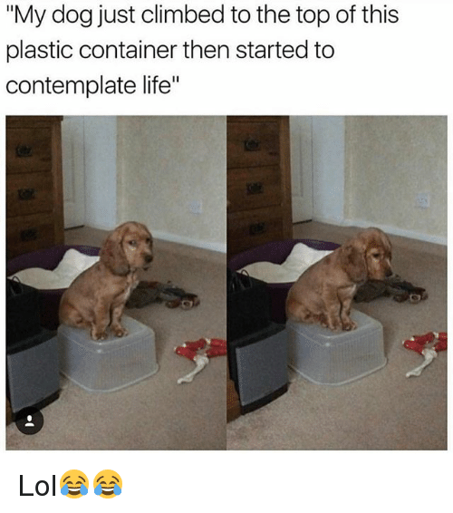 "Funny, Life, and Lol: ""My dog just climbed to the top of this  plastic container then started to  contemplate life"" Lol😂😂"