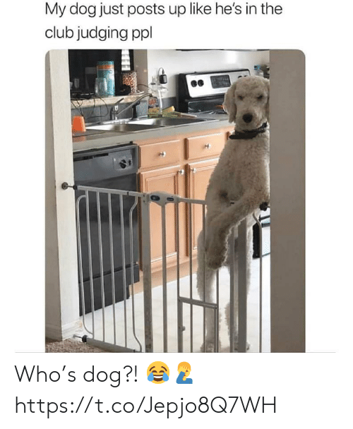 Club, Dog, and Who: My dog just posts up like he's in the  club judging ppl Who's dog?! 😂🤦♂️ https://t.co/Jepjo8Q7WH