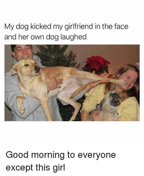 Funny, Good Morning, and Girl: My dog kicked my girlfriend in the face  and her own dog laughed Good morning to everyone except this girl