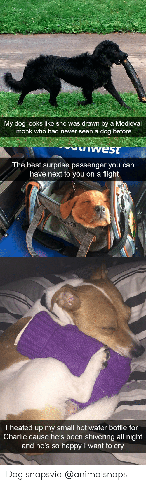 Charlie, Target, and Tumblr: My dog looks like she was drawn by a Medieval  monk who had never seen a dog before   west  The best surprise passenger you can  have next to you on a flight   I heated up my small hot water bottle for  Charlie cause he's been shivering all night  and he's so happy I want to cry Dog snapsvia @animalsnaps​