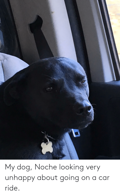 Dog, Car, and Looking: My dog, Noche looking very unhappy about going on a car ride.