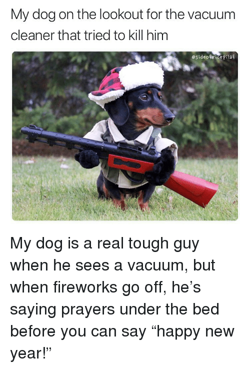 memes new years and fireworks my dog on the lookout for the vacuum