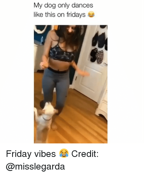 Friday, Memes, and 🤖: My dog only dances  like this on fridays Friday vibes 😂 Credit: @misslegarda