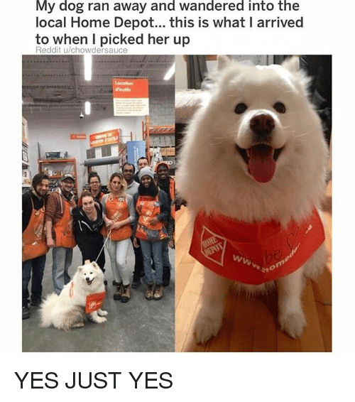 Funny, Reddit, and Home: My dog ran away and wandered into the  local Home Depot... this is what I arrived  to when I picked her up  Reddit u/chowdersauce  d'outils YES JUST YES