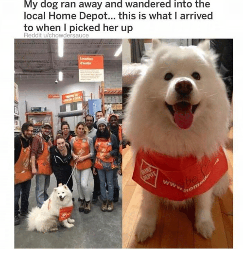 Dank, Reddit, and Home: My dog ran away and wandered into the  local Home Depot.., this is what I arrived  to when l picked her up  Reddit u/chowdersauce
