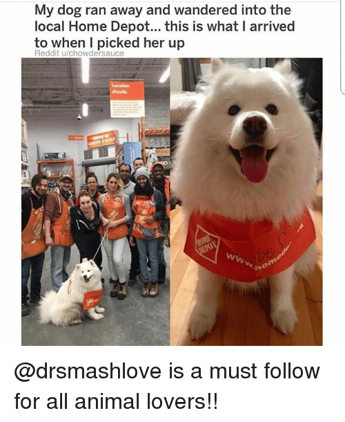 Memes, Reddit, and Animal: My dog ran away and wandered into the  local Home Depot... this is what I arrived  to when I picked her up  Reddit u/chowdersauce  но @drsmashlove is a must follow for all animal lovers!!